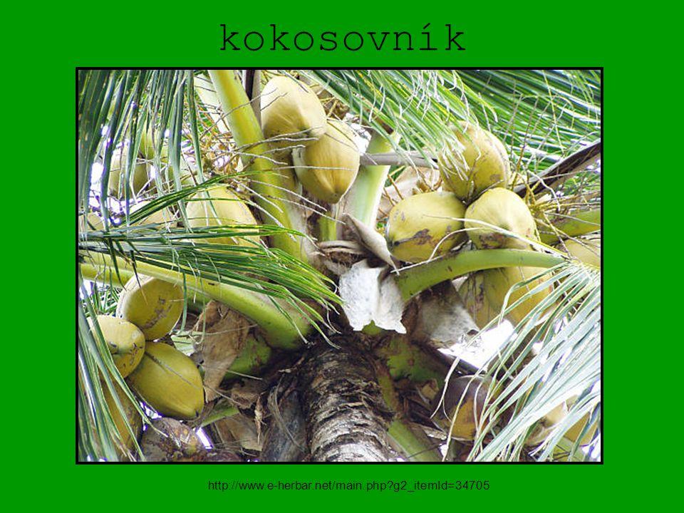 kokosovník http://www.e-herbar.net/main.php?g2_itemId=34705