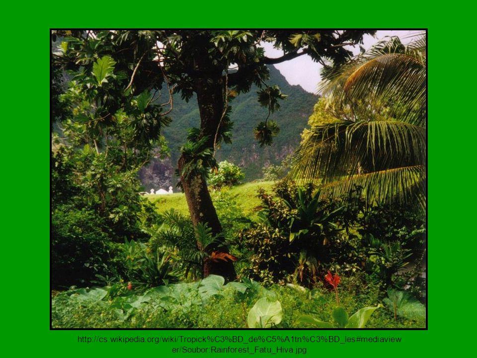 tropické dřeviny (eben, mahagon, týk, palisandr...)