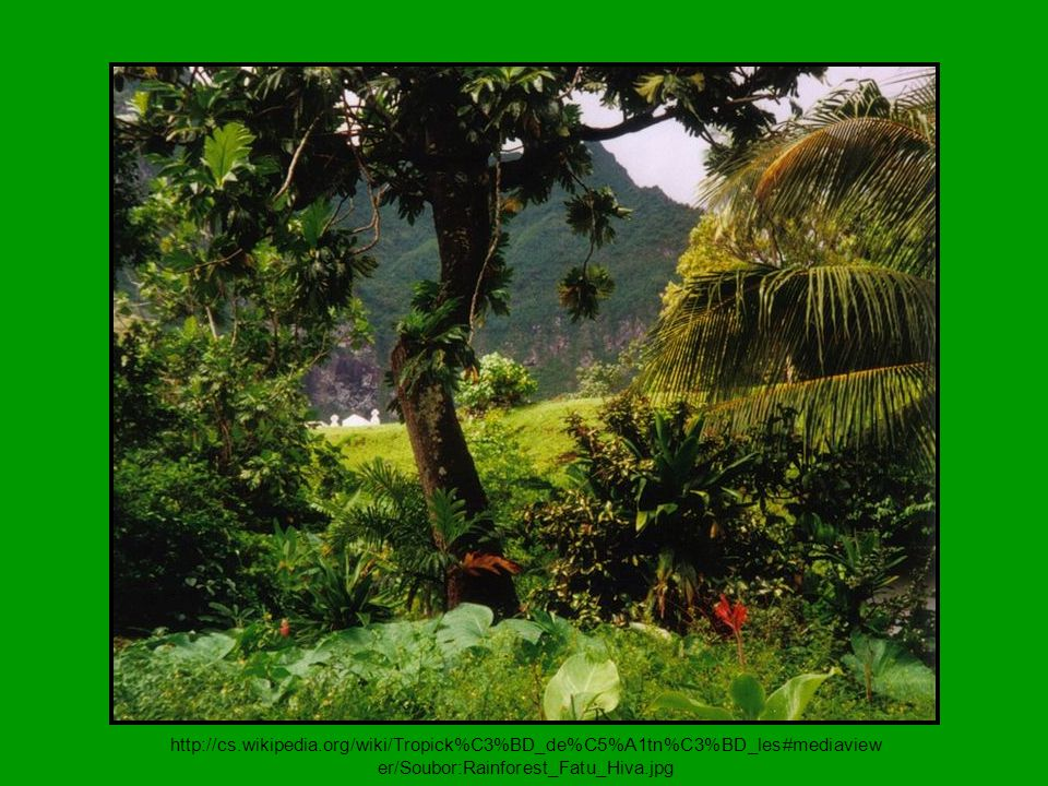 http://cs.wikipedia.org/wiki/Tropick%C3%BD_de%C5%A1tn%C3%BD_les#mediaview er/Soubor:Rainforest_Fatu_Hiva.jpg