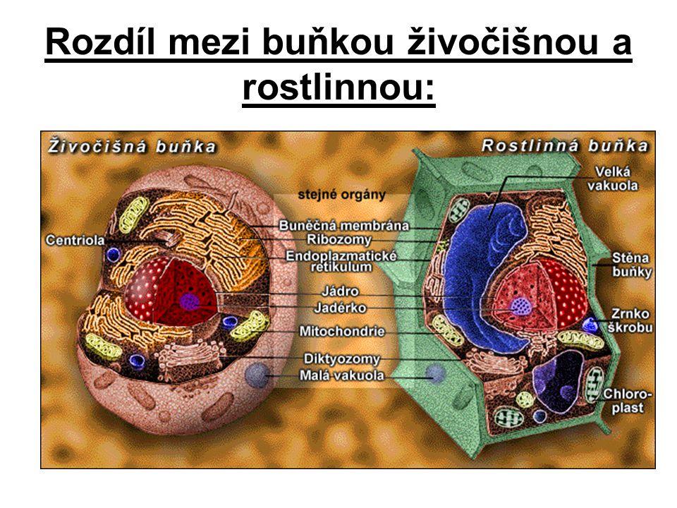 Rozdíl mezi buňkou živočišnou a rostlinnou: