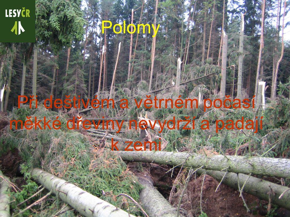 Polomy Při deštivém a větrném počasí měkké dřeviny nevydrží a padají k zemi
