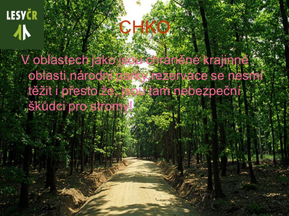 CHKO V oblastech jako jsou chráněné krajinné oblasti,národní parky,rezervace se nesmí těžit i přesto že, jsou tam nebezpeční škůdci pro stromy!