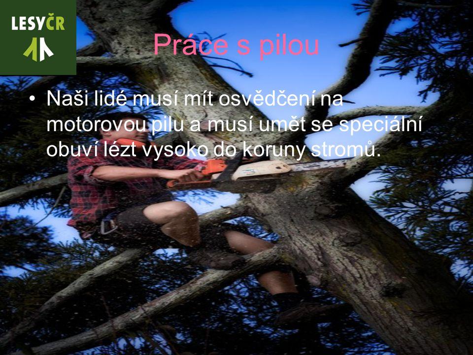 Práce s pilou Naši lidé musí mít osvědčení na motorovou pilu a musí umět se speciální obuví lézt vysoko do koruny stromů.