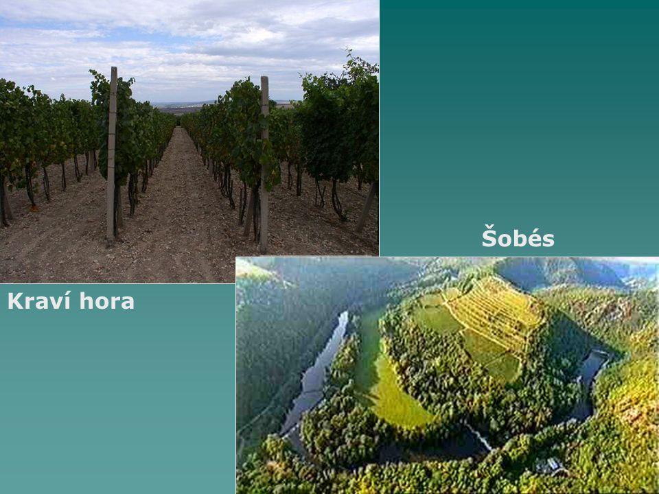 Kraví hora Šobés