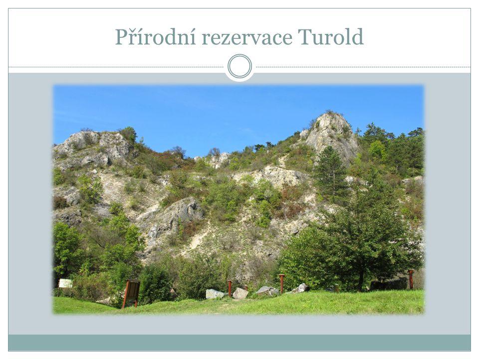 GYMNÁZIUM T.G.MASARYKA HUSTOPEČE 20.6.2014 Přírodní rezervace na Turoldu – biologická exkurze