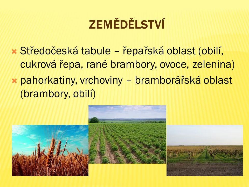 ZEMĚDĚLSTVÍ  Středočeská tabule – řepařská oblast (obilí, cukrová řepa, rané brambory, ovoce, zelenina)  pahorkatiny, vrchoviny – bramborářská oblas