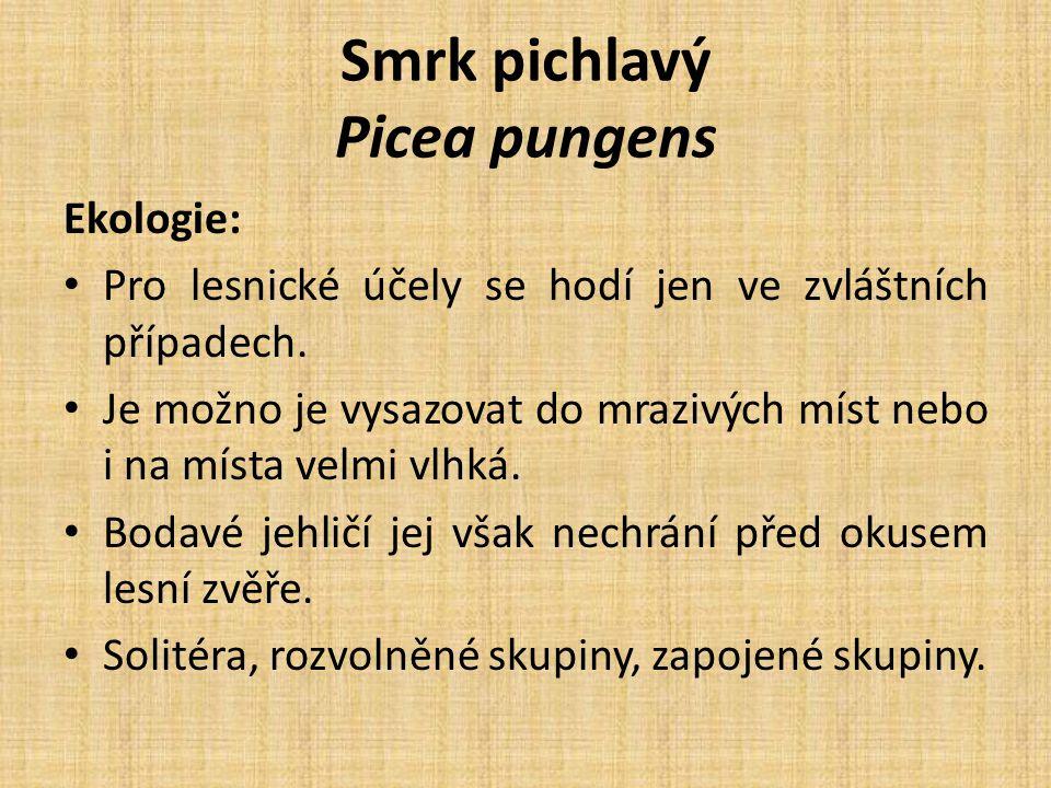 Smrk pichlavý Picea pungens Ekologie: Pro lesnické účely se hodí jen ve zvláštních případech.