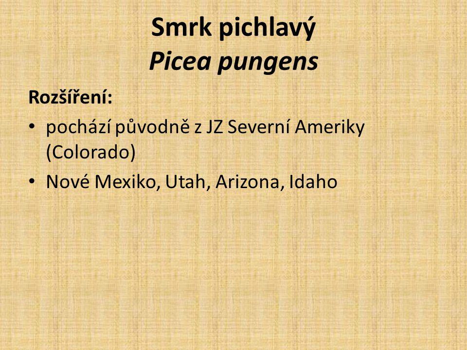 Smrk pichlavý Picea pungens Rozšíření: pochází původně z JZ Severní Ameriky (Colorado) Nové Mexiko, Utah, Arizona, Idaho