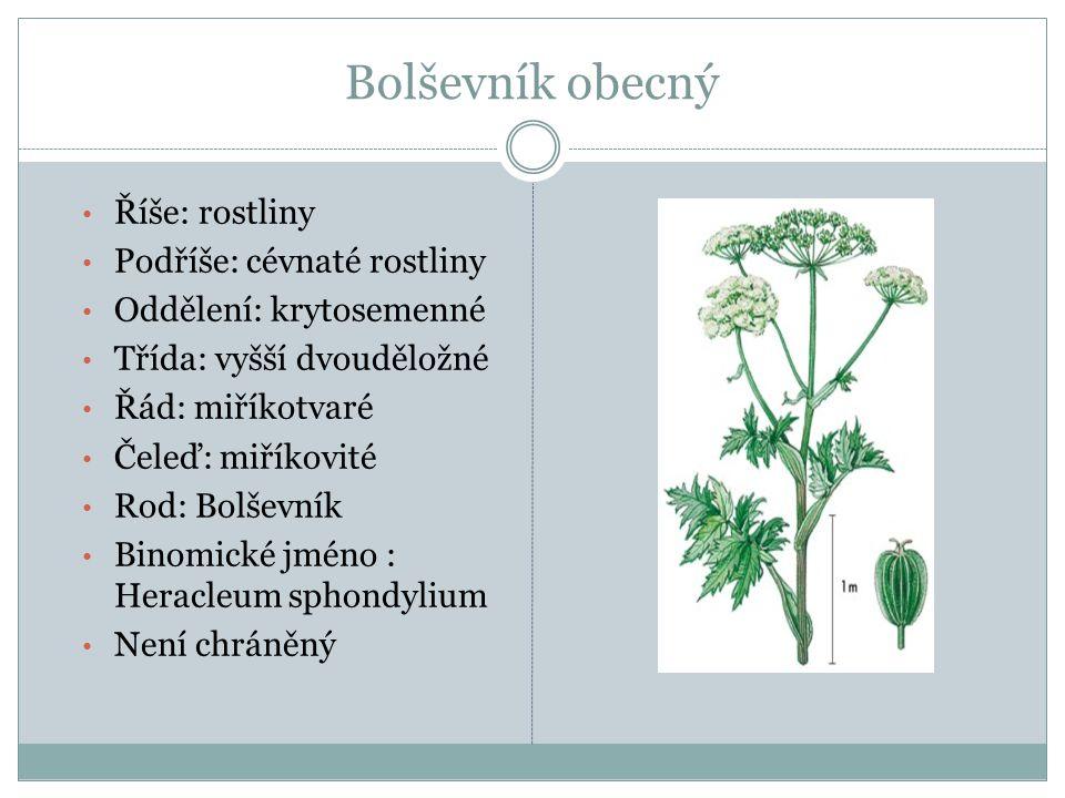 Říše: rostliny Podříše: cévnaté rostliny Oddělení: krytosemenné Třída: vyšší dvouděložné Řád: miříkotvaré Čeleď: miříkovité Rod: Bolševník Binomické j