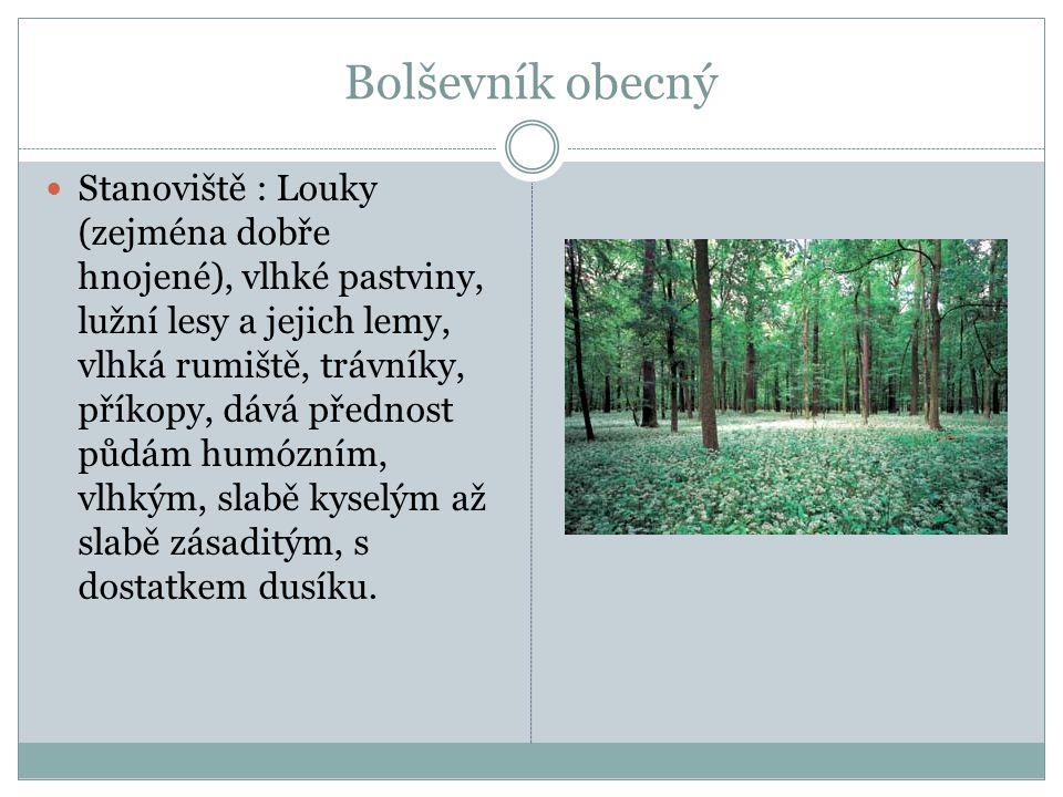 Bolševník obecný Stanoviště : Louky (zejména dobře hnojené), vlhké pastviny, lužní lesy a jejich lemy, vlhká rumiště, trávníky, příkopy, dává přednost