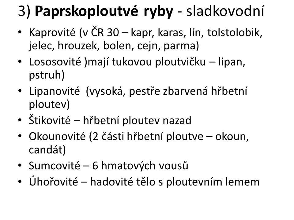 3) Paprskoploutvé ryby - sladkovodní Kaprovité (v ČR 30 – kapr, karas, lín, tolstolobik, jelec, hrouzek, bolen, cejn, parma) Lososovité )mají tukovou