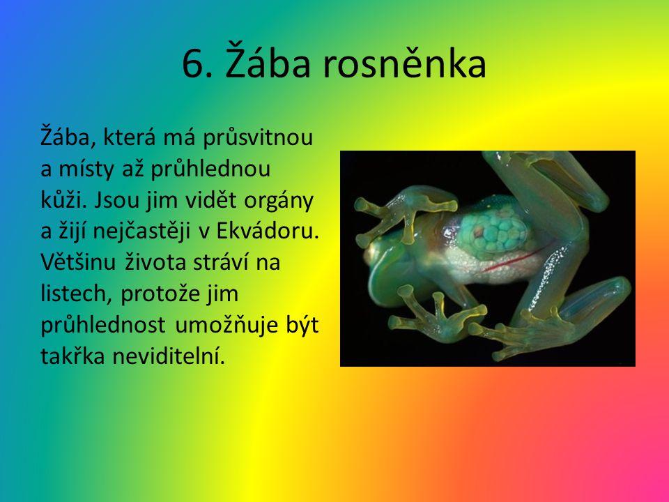 6. Žába rosněnka Žába, která má průsvitnou a místy až průhlednou kůži. Jsou jim vidět orgány a žijí nejčastěji v Ekvádoru. Většinu života stráví na li