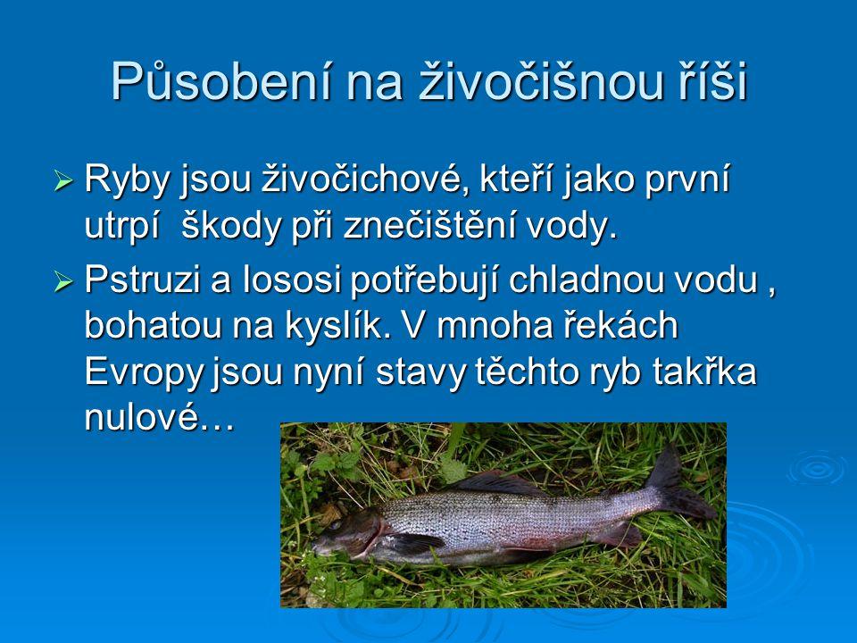 Působení na živočišnou říši  Ryby jsou živočichové, kteří jako první utrpí škody při znečištění vody.  Pstruzi a lososi potřebují chladnou vodu, boh
