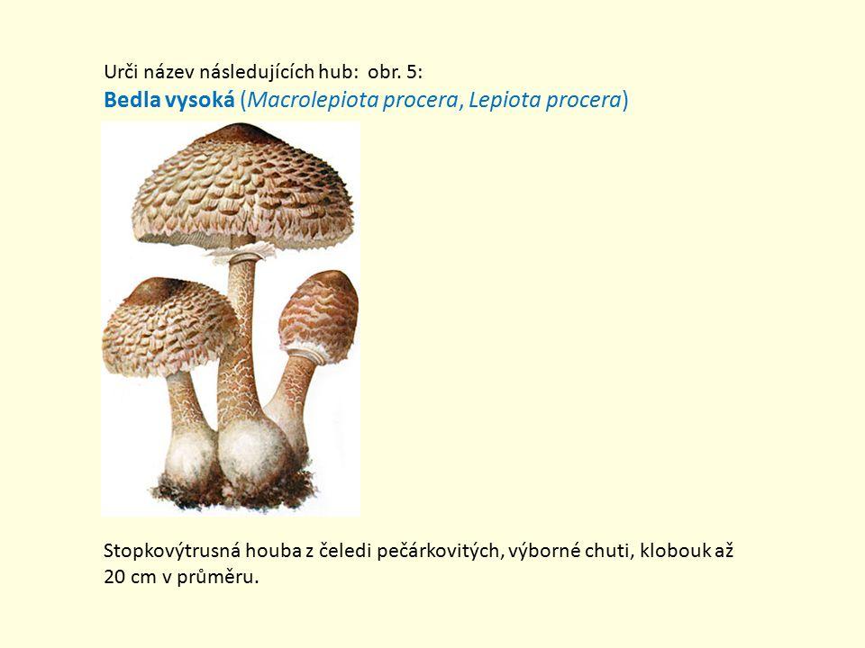 Urči název následujících hub: obr.