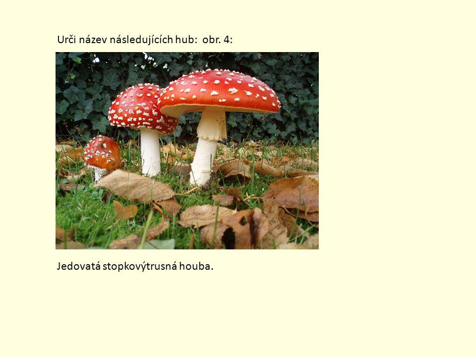 Urči název následujících hub: obr. 4: Jedovatá stopkovýtrusná houba.