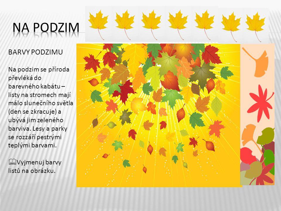 3 BARVY PODZIMU Na podzim se příroda převléká do barevného kabátu – listy na stromech mají málo slunečního světla (den se zkracuje) a ubývá jim zelené