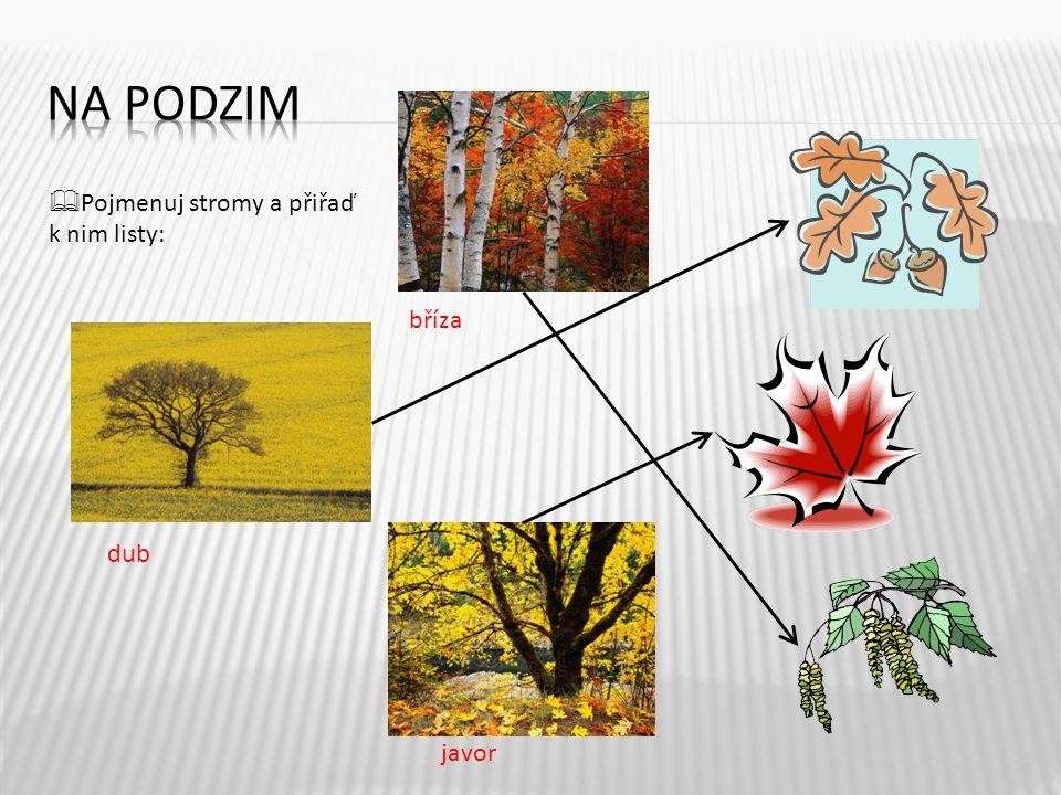 4  Pojmenuj stromy a přiřaď k nim listy: bříza dub javor