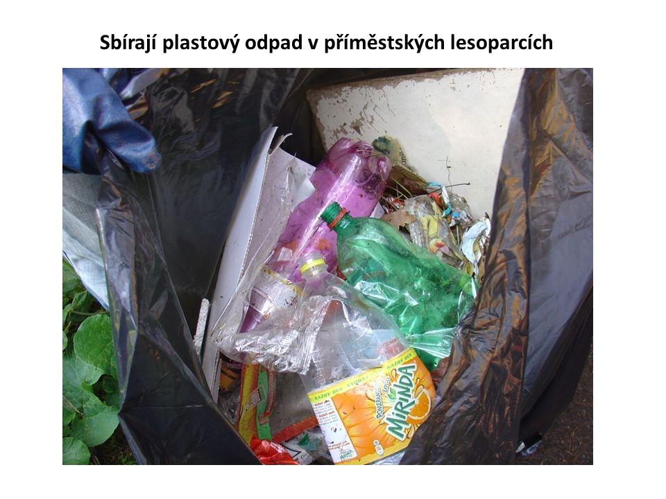 Sbírají plastový odpad v příměstských lesoparcích