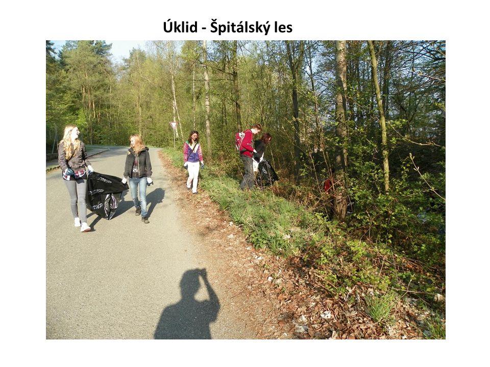 Úklid - Špitálský les