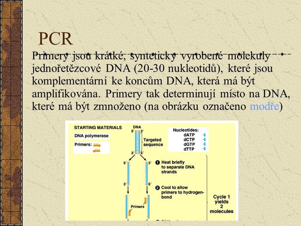 PCR Primery jsou krátké, synteticky vyrobené molekuly jednořetězcové DNA (20-30 nukleotidů), které jsou komplementární ke koncům DNA, která má být amp