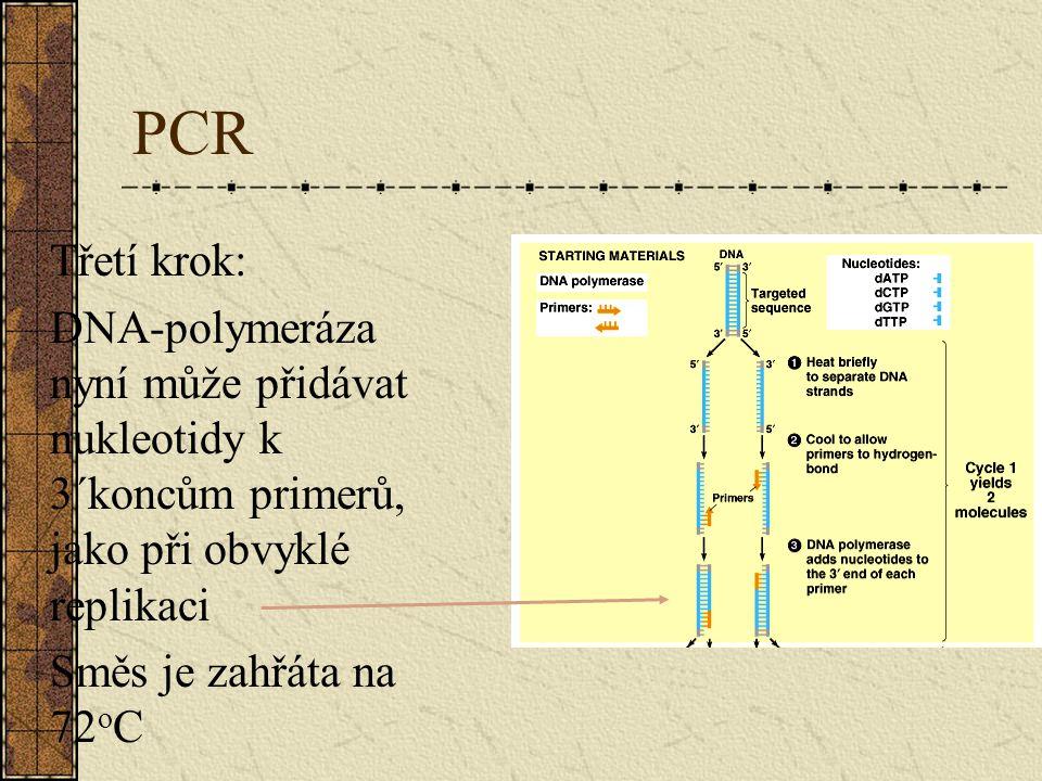 PCR Třetí krok: DNA-polymeráza nyní může přidávat nukleotidy k 3´koncům primerů, jako při obvyklé replikaci Směs je zahřáta na 72 o C