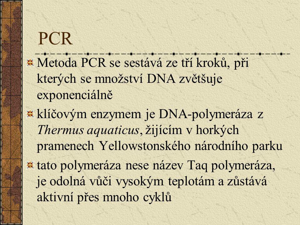 PCR Metoda PCR se sestává ze tří kroků, při kterých se množství DNA zvětšuje exponenciálně klíčovým enzymem je DNA-polymeráza z Thermus aquaticus, žijícím v horkých pramenech Yellowstonského národního parku tato polymeráza nese název Taq polymeráza, je odolná vůči vysokým teplotám a zůstává aktivní přes mnoho cyklů