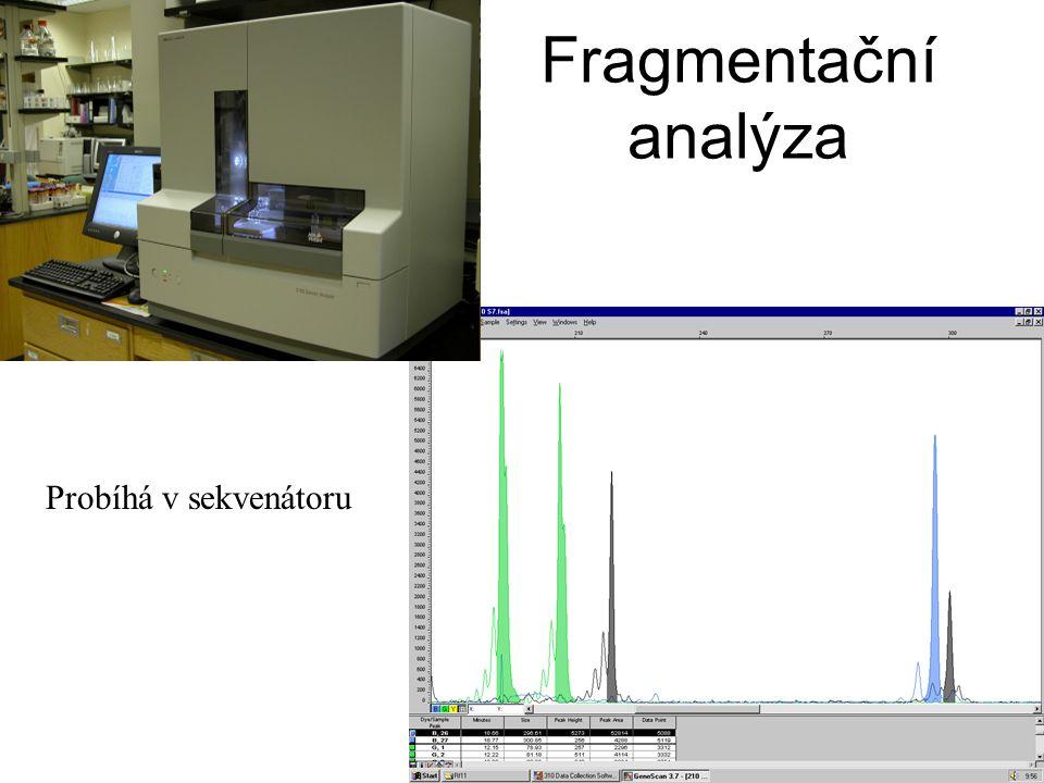 Fragmentační analýza Probíhá v sekvenátoru