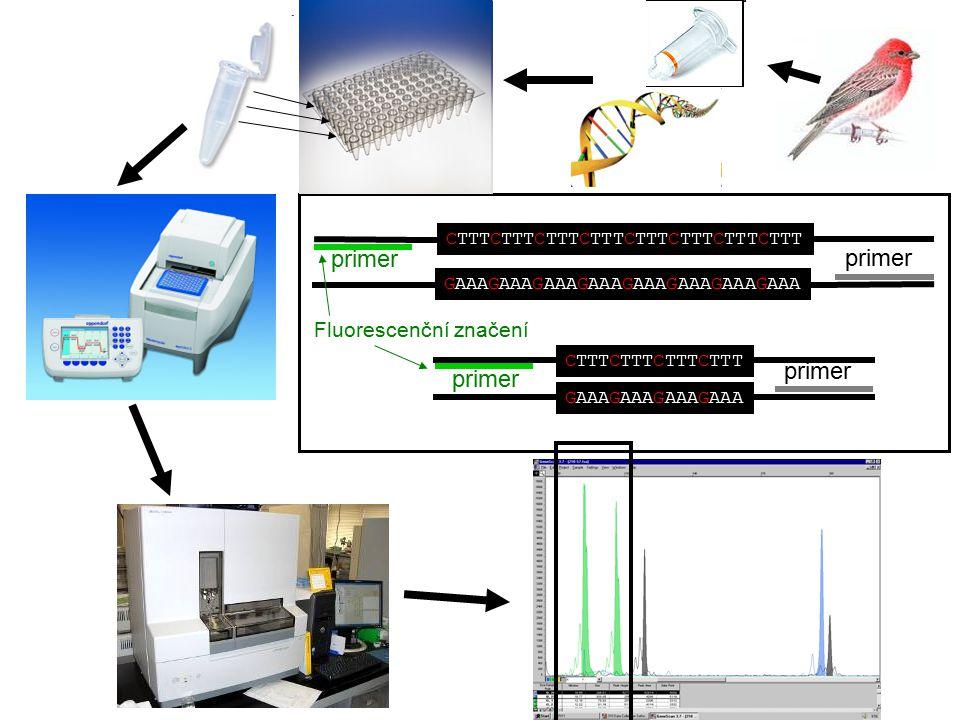 CTTTCTTTCTTTCTTTCTTTCTTTCTTTCTTT CTTTCTTTCTTTCTTT GAAAGAAAGAAAGAAAGAAAGAAAGAAAGAAA primer GAAAGAAAGAAAGAAA primer Fluorescenční značení