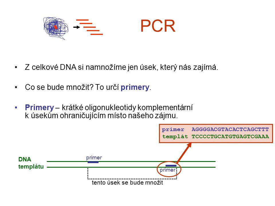 PCR Z celkové DNA si namnožíme jen úsek, který nás zajímá.