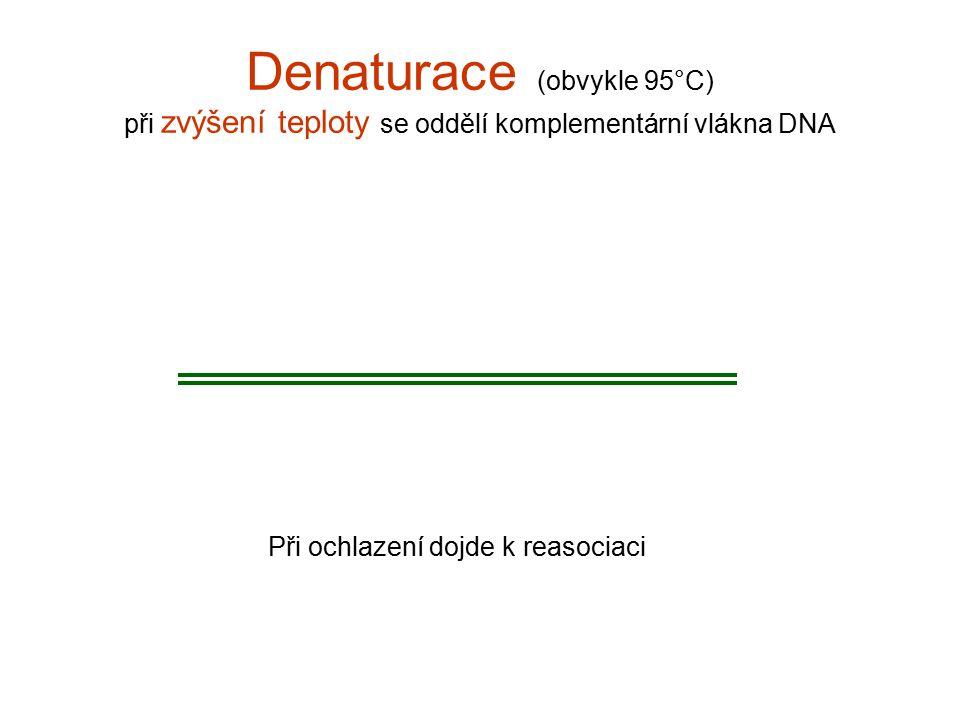 Denaturace (obvykle 95°C) při zvýšení teploty se oddělí komplementární vlákna DNA Při ochlazení dojde k reasociaci