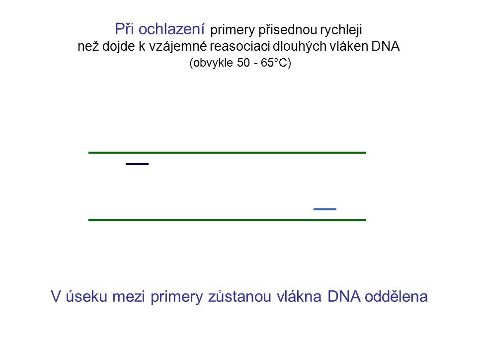 Při ochlazení primery přisednou rychleji než dojde k vzájemné reasociaci dlouhých vláken DNA (obvykle 50 - 65°C) V úseku mezi primery zůstanou vlákna DNA oddělena