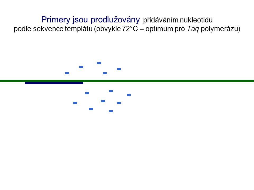 Primery jsou prodlužovány přidáváním nukleotidů podle sekvence templátu (obvykle 72°C – optimum pro Taq polymerázu)