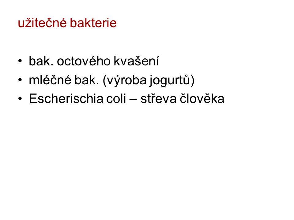 užitečné bakterie bak. octového kvašení mléčné bak. (výroba jogurtů) Escherischia coli – střeva člověka