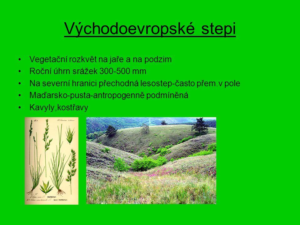 Východoevropské stepi Vegetační rozkvět na jaře a na podzim Roční úhrn srážek 300-500 mm Na severní hranici přechodná lesostep-často přem.v pole Maďar