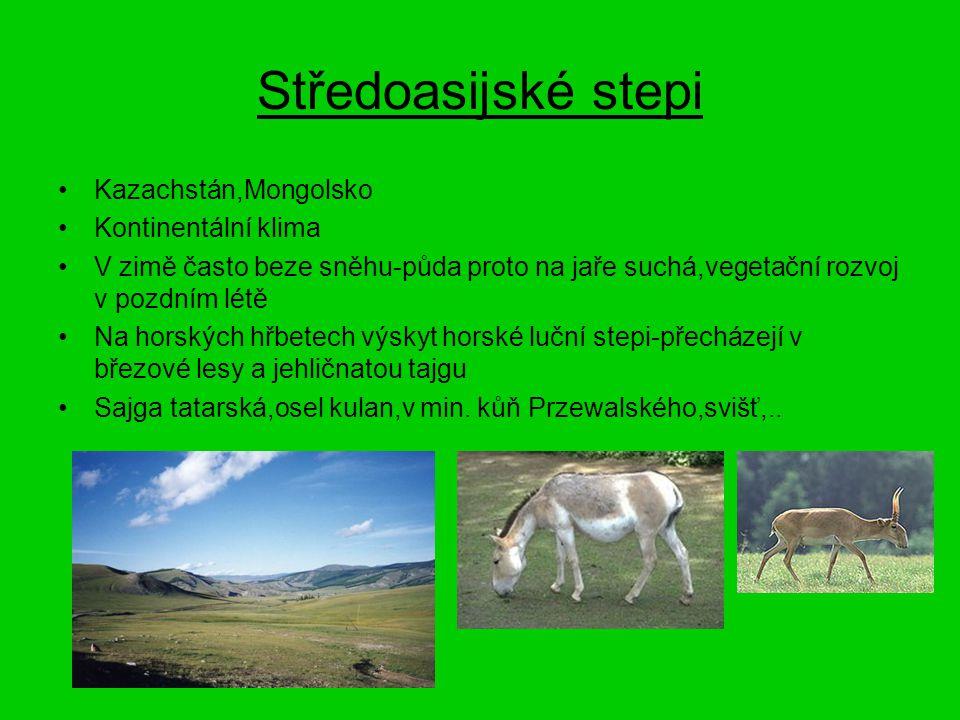 Středoasijské stepi Kazachstán,Mongolsko Kontinentální klima V zimě často beze sněhu-půda proto na jaře suchá,vegetační rozvoj v pozdním létě Na horsk