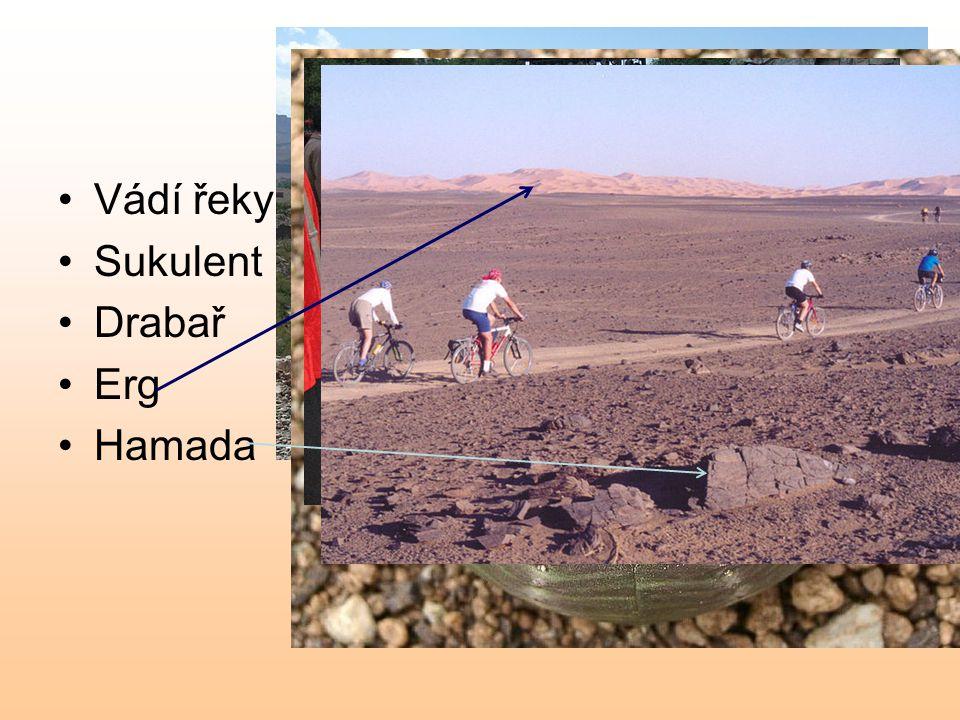 Obrazem Vádí řeky Draa Sukulent Drabař Erg Hamada