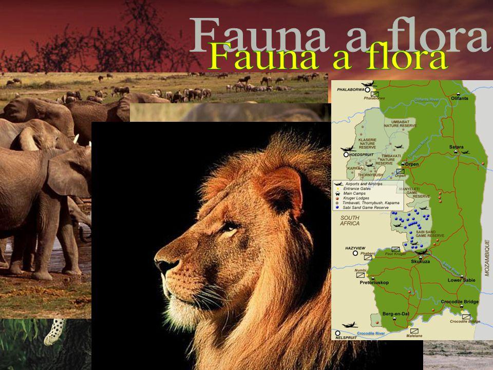 3. na světě v biologické rozmanitosti 10% světových rostlin Velká pětka: slon, lev, buvol, levhart, nosorožec 21 národních parků:Krugerův NP: 19000 km