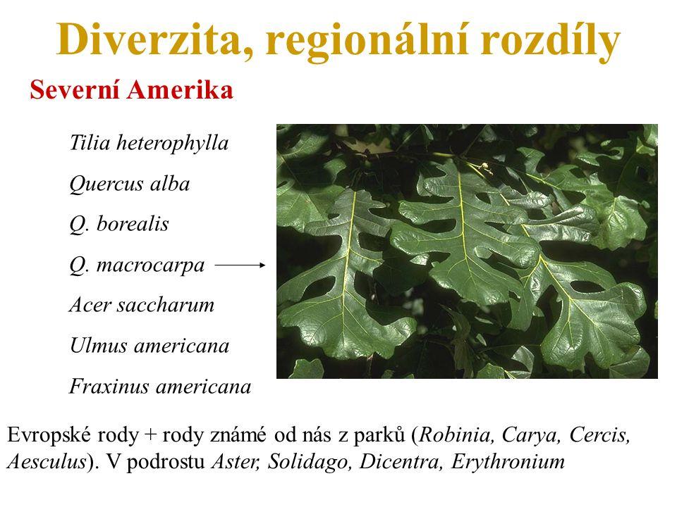 Diverzita, regionální rozdíly Severní Amerika Tilia heterophylla Quercus alba Q. borealis Q. macrocarpa Acer saccharum Ulmus americana Fraxinus americ