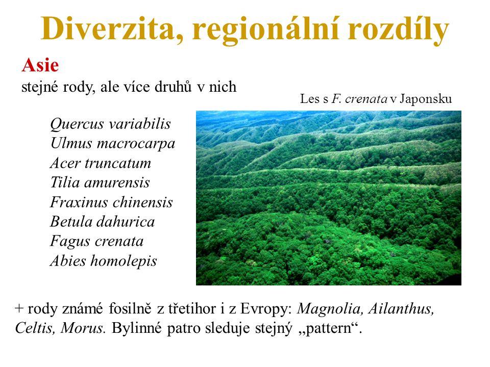 Diverzita, regionální rozdíly Asie stejné rody, ale více druhů v nich Quercus variabilis Ulmus macrocarpa Acer truncatum Tilia amurensis Fraxinus chinensis Betula dahurica Fagus crenata Abies homolepis Les s F.