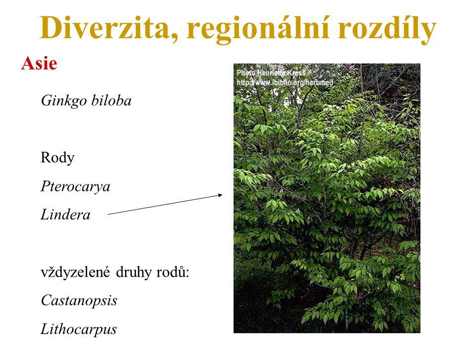 Diverzita, regionální rozdíly Asie Ginkgo biloba Rody Pterocarya Lindera vždyzelené druhy rodů: Castanopsis Lithocarpus
