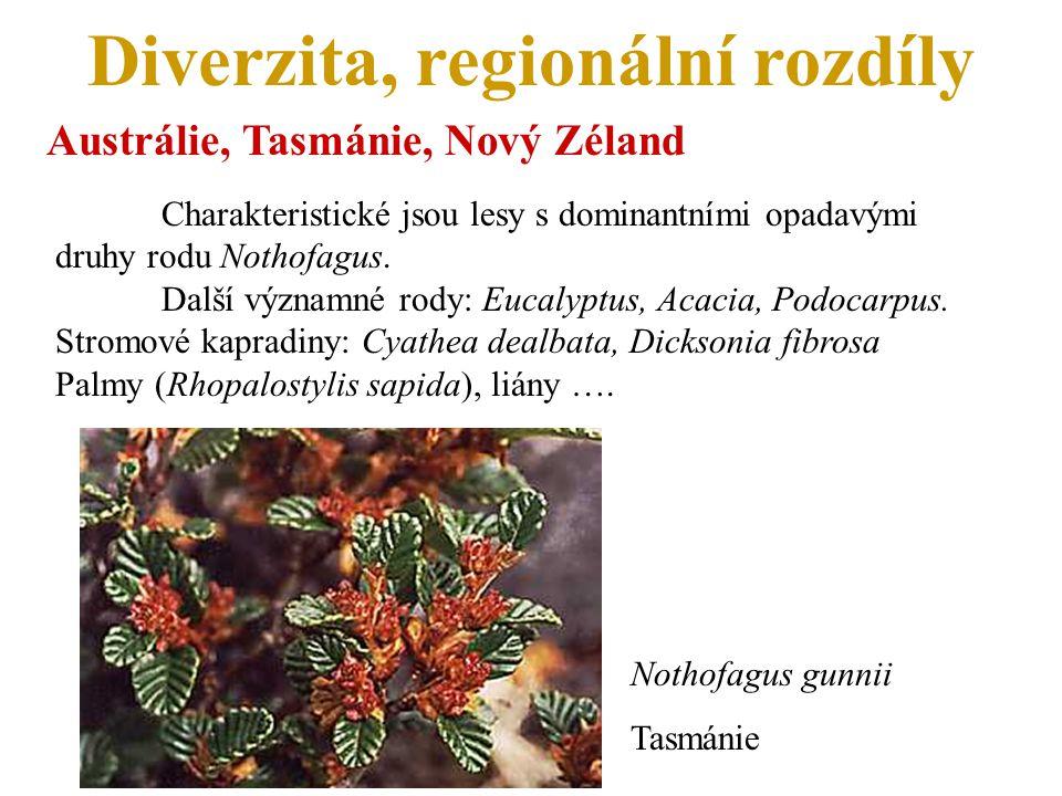 Diverzita, regionální rozdíly Austrálie, Tasmánie, Nový Zéland Charakteristické jsou lesy s dominantními opadavými druhy rodu Nothofagus.