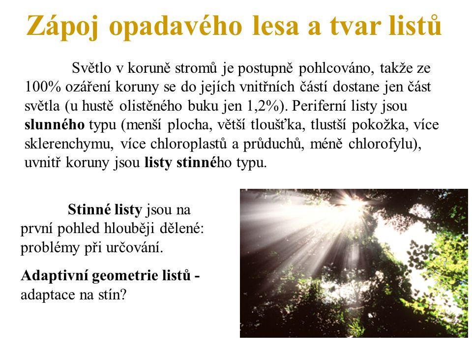Zápoj opadavého lesa a tvar listů Světlo v koruně stromů je postupně pohlcováno, takže ze 100% ozáření koruny se do jejích vnitřních částí dostane jen část světla (u hustě olistěného buku jen 1,2%).
