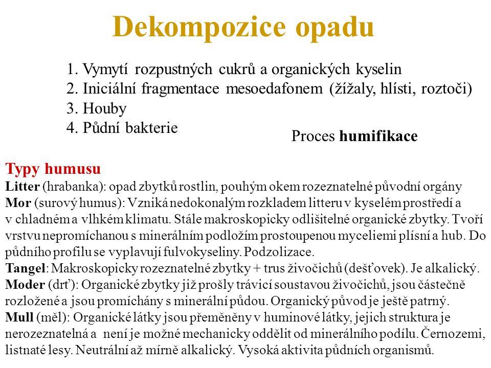 Dekompozice opadu 1. Vymytí rozpustných cukrů a organických kyselin 2. Iniciální fragmentace mesoedafonem (žížaly, hlísti, roztoči) 3. Houby 4. Půdní
