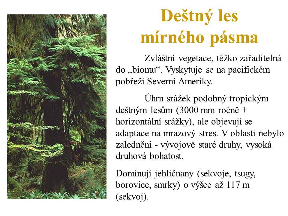 """Deštný les mírného pásma Zvláštní vegetace, těžko zařaditelná do """"biomu"""". Vyskytuje se na pacifickém pobřeží Severní Ameriky. Úhrn srážek podobný trop"""