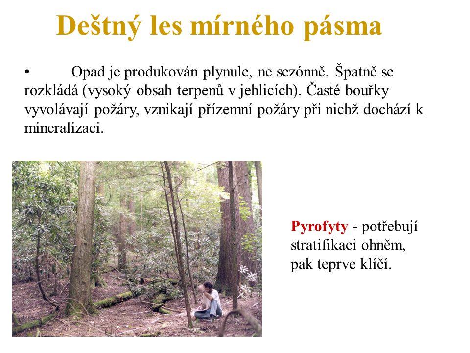 Deštný les mírného pásma Opad je produkován plynule, ne sezónně. Špatně se rozkládá (vysoký obsah terpenů v jehlicích). Časté bouřky vyvolávají požáry