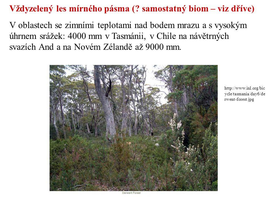 http://www.inl.org/bic ycle/tasmania/day6/de rwent-forest.jpg Vždyzelený les mírného pásma (? samostatný biom – viz dříve) V oblastech se zimními tepl