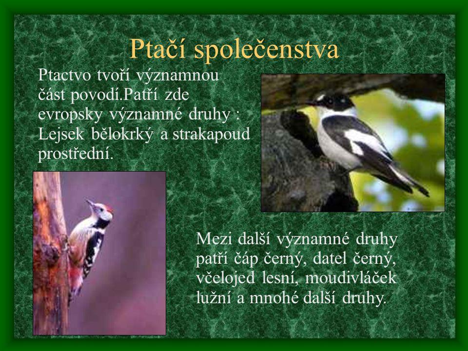 Nivní louky Jsou nejen stanovištěm vzácných druhů rostlin a živočichů, ale i protierozním a protipovodňovým prvkem v nivě. Mezi významné druhy vlhkých