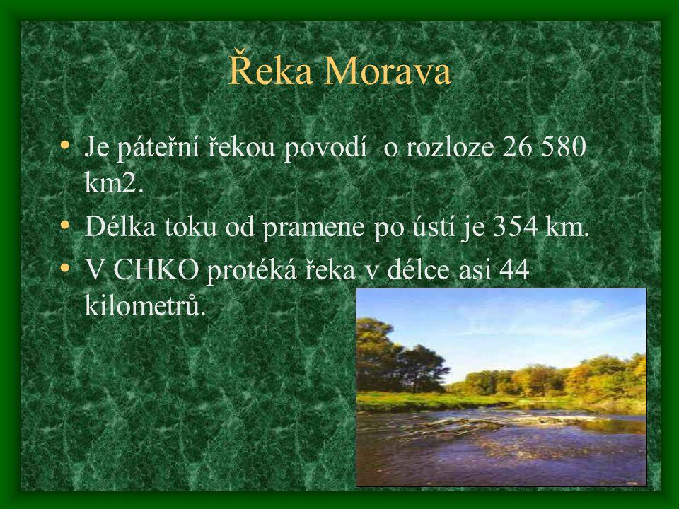 Ptačí společenstva Ptactvo tvoří významnou část povodí.Patří zde evropsky významné druhy : Lejsek bělokrký a strakapoud prostřední.