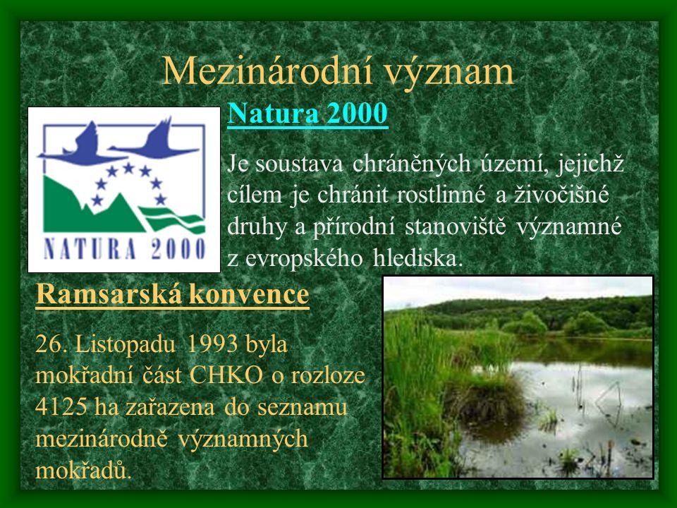 Řeky a její břehy Rozmanitém vodním prostředí žije bohaté společenstvo ryb např. střevle potoční, mník jednovousý a ouklejka pruhovaná. Z ptáků : kulí