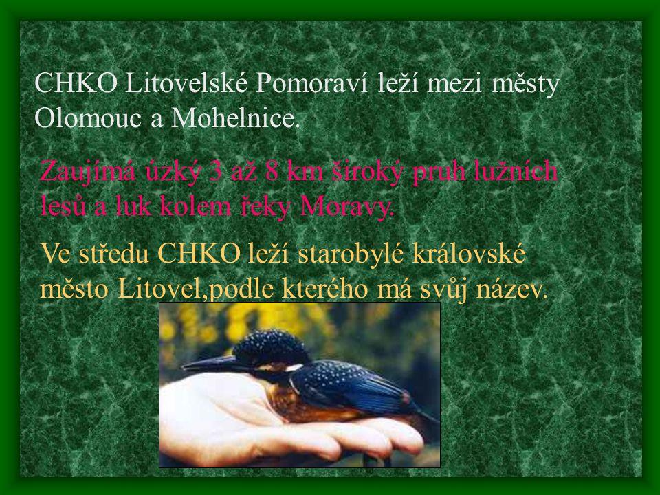 V České republice je celkem 24 Chráněných krajinných oblastí. Jednou z nich je i Litovelské Pomoraví, ležící na střední Moravě.